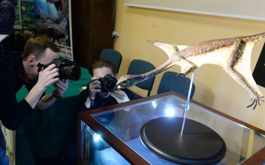 Ozimek volans to największe zwierzę latające triasu /Jacek Turczyk /PAP