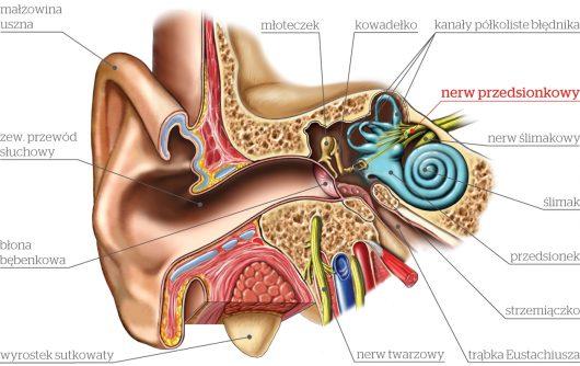 schemat-ucha-i-nerw-przedsionkowy