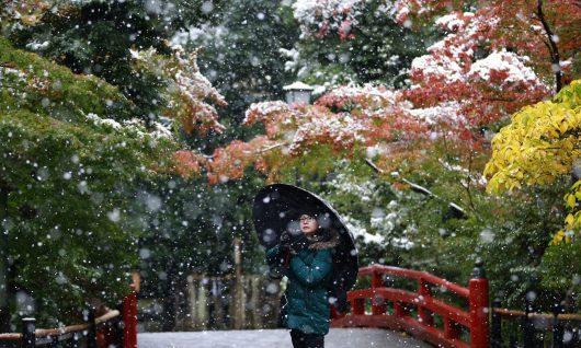 tokio-japonia-po-raz-pierwszy-od-54-lat-snieg-spadl-w-listopadzie-2