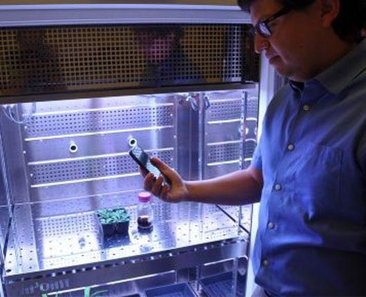 w-mit-polaczyli-szpinak-z-nanorurkami-czujniki-szpinakowe-beda-mogly-wykrywac-materialy-wybuchowe-1