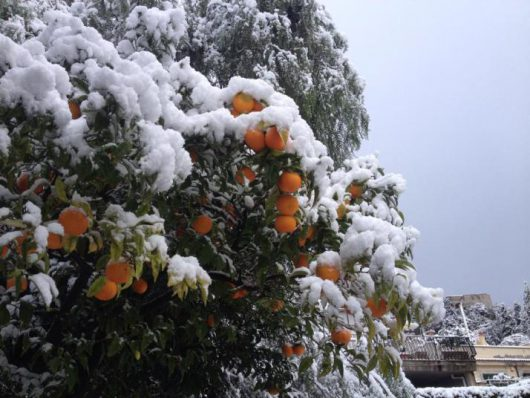 Włochy – Z powodu śnieżyc i dużego mrozu około 300 tysięcy osób nie ma prądu, brakuje też wody, na południu kraju wprowadzono stan kryzysowy