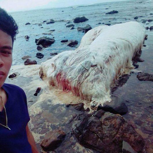 Włochate stworzenie na plaży na Filipinach, waży około 2 tony, mierzy 6 metrów