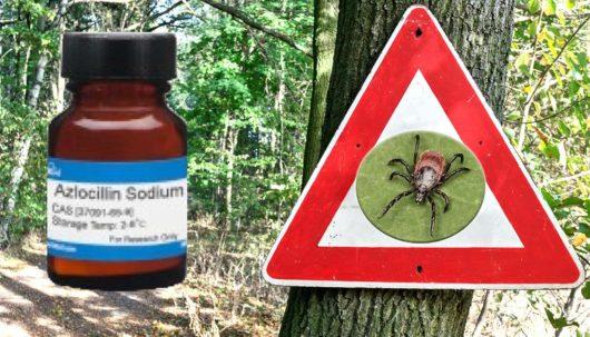 Azlocylina skutecznie leczy boreliozę