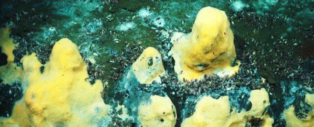 Mikroby oceaniczne w skałach węglanowych odgrywają kluczową rolę w regulowaniu temperatury Ziemi
