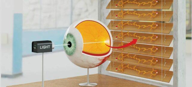 Żaluzje molekularne w ludzkim oku