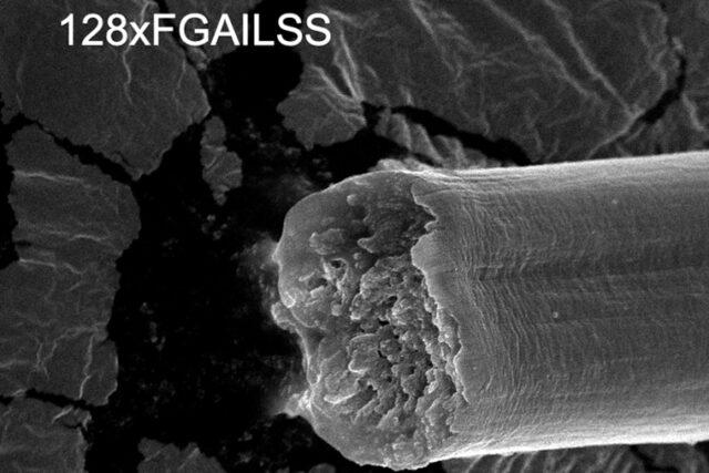 Genetycznie zmodyfikowane bakterie wytworzyły pajęcze nici mocniejsze niż stal, twardsze niż kevlar