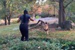 USA - W Zoo na Bronxie na wybieg z lwem weszła mało rozgarnięta kobieta i próbowała śpiewać i tańczyć przed zdziwionym zwierzęciem