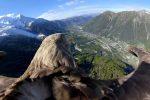 Orzeł bielik z kamerą nad pięknymi Alpami