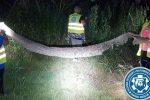 Polska - Nad Wisłą znaleziono wylinkę potężnego węża, jeśli to nie jest kogoś głupi żart, to 5.3 metrowej długości pyton tygrysi może stanowić poważne zagrożenie