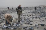 Holandia - Z potężnego kontenerowca podczas sztormu wypadło do morza około 270 kontenerów, na plażach można znaleźć telewizory oraz groźne dla środowiska chemikalia